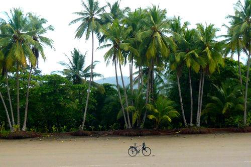 Vélo-palmiers