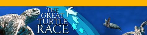 Fgreat_turtle_race2