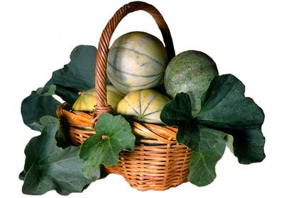 Stilllife_melons
